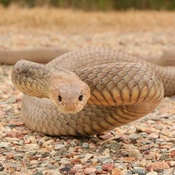 Contact South East Reptile Relocations