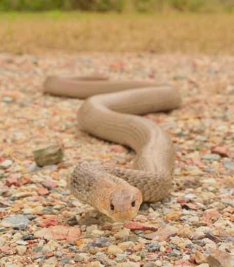 Helensvale Snake Catcher