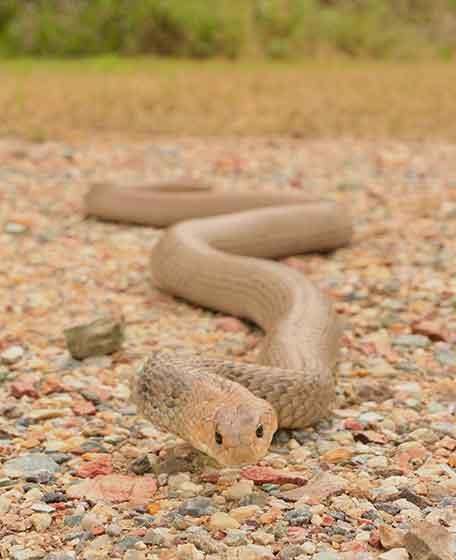 Pimpama Snake Catcher