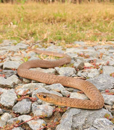 Upper Coomera Snake Catcher