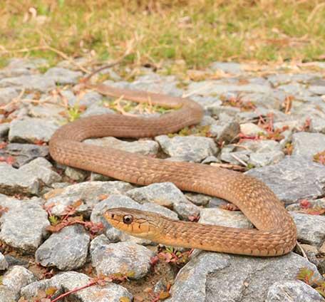 About Snake Catcher Gold Coast